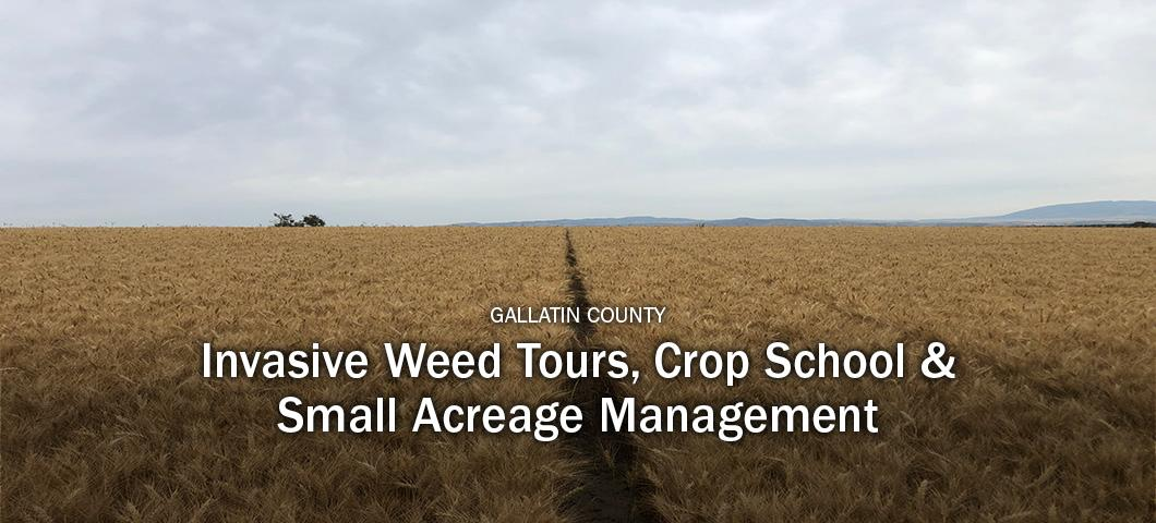 Gallatin County invasive weed tours, crop school and small acreage management