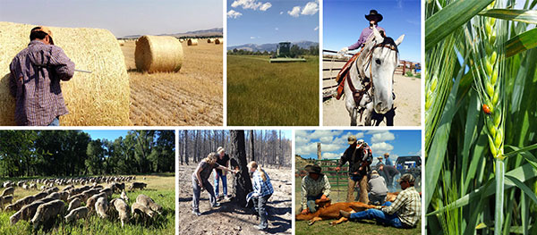 Agriculture in MT